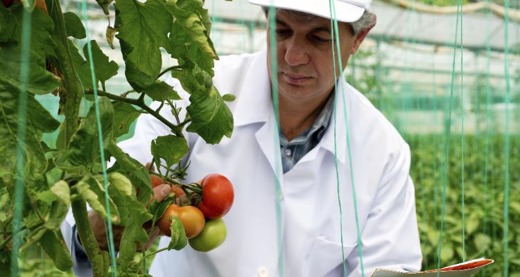 Conheça o trabalho do Ministério da Agricultura na fiscalização de produtos de origem vegetal.