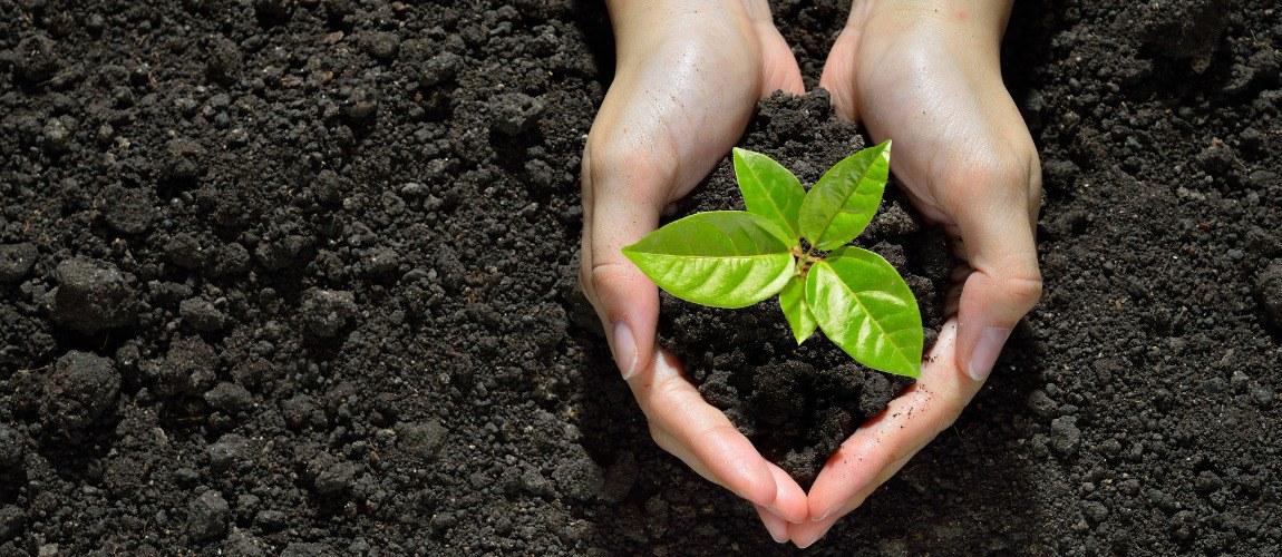 Todo fator de produção utilizado com o objetivo de garantir a nutrição e a proteção das plantas para obter boa produtividade da lavoura e produto final de boa qualidade.