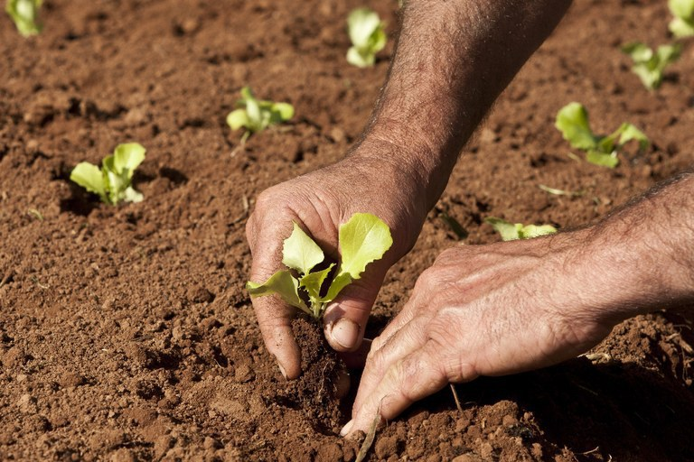 Agricultura familiar tem 19% mais recursos no Plano Safra 2021/2022