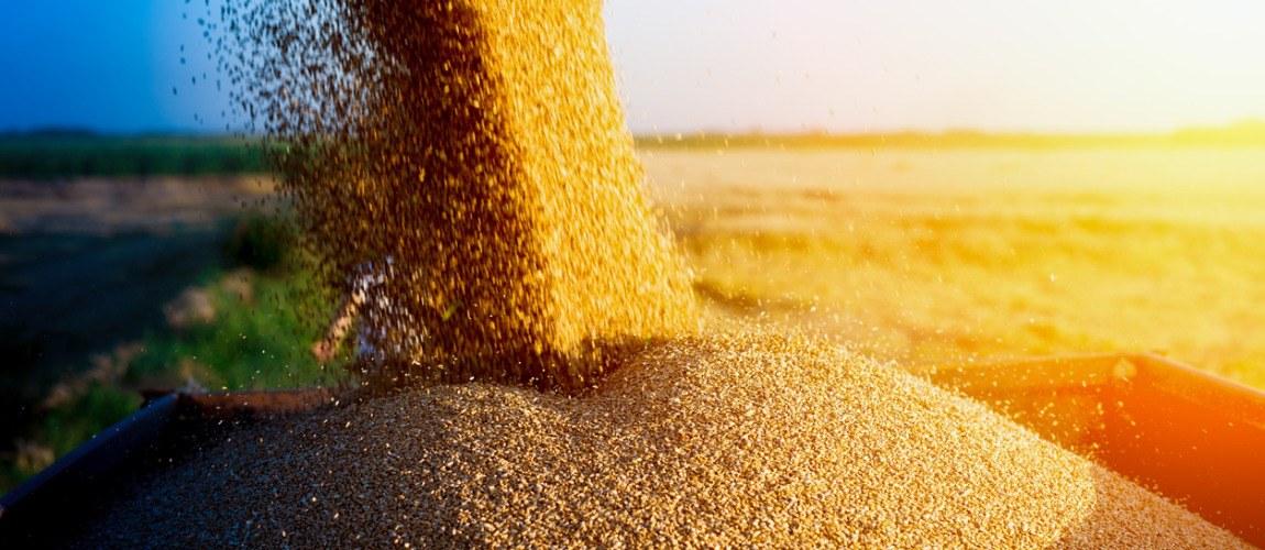 Com o seguro rural o produtor pode minimizar suas perdas ao recuperar o investimento na sua lavoura.