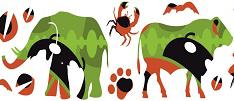 Sanidade Animal Mundial