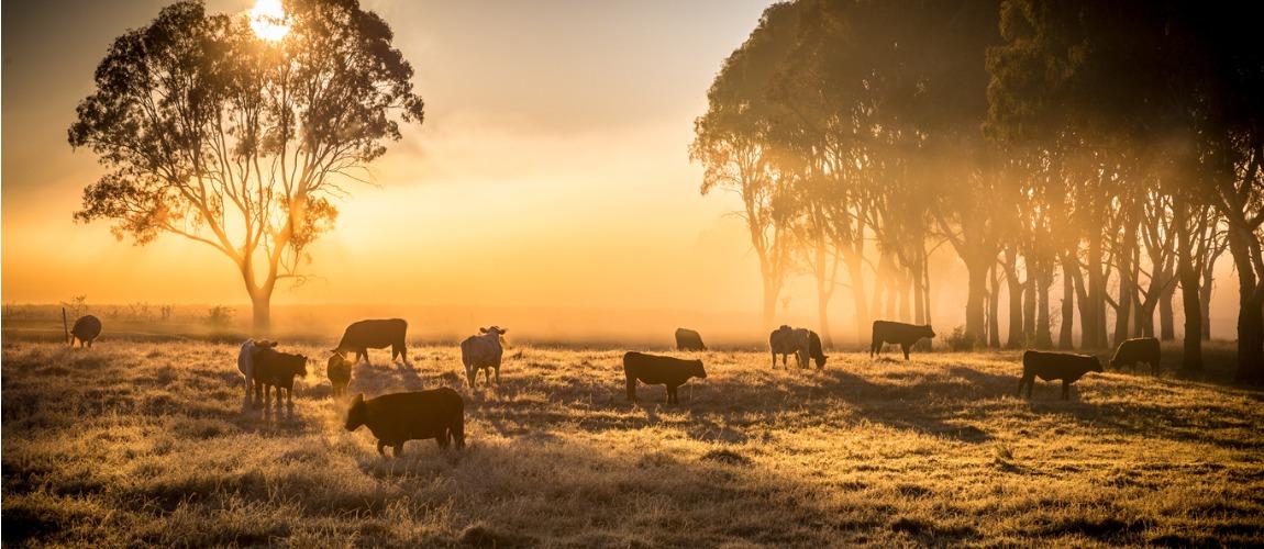Saiba mais sobre a doença de maior impacto na pecuária mundial.