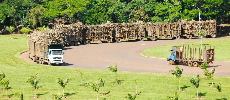 Programas como os do etanol e do biodiesel atraem a atenção do mundo por ofertar alternativas econômica e ecologicamente viáveis à substituição dos combustíveis fósseis. Menos poluente e mais barata, a geração de energia com o uso de produtos agrícolas representa a segunda principal fonte de energia primária do País. O consumo do álcool supera o da gasolina e o biodiesel já conta com participação relevante na matriz de combustíveis no País em mistura obrigatória com a gasolina.