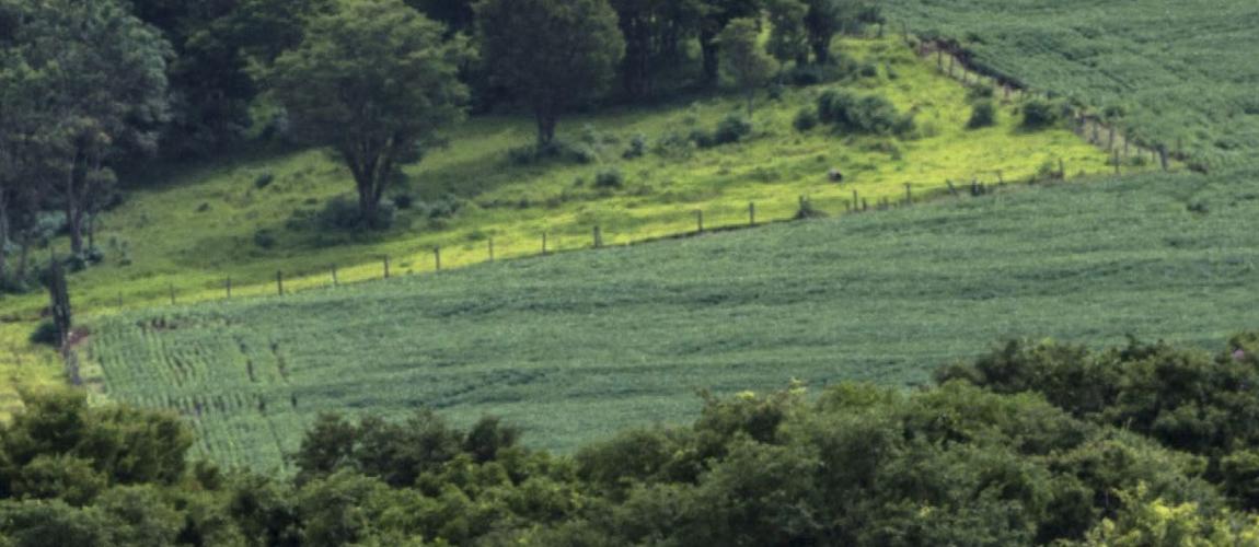 Diretrizes para o Desenvolvimento Sustentável da Agropecuária Brasileira
