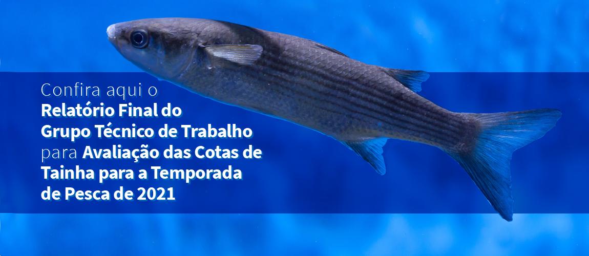 Confira aqui o Relatório Final do Grupo Técnico de Trabalho para Avaliação das Cotas de Tainha para a Temporada de Pesca de 2021