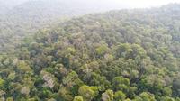 Imagem aérea da Terra Indígena Guarita feita por drone utilizado na ação de fiscalização