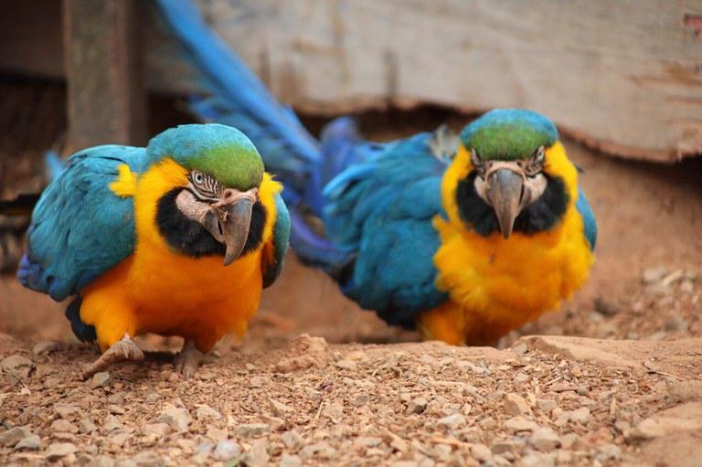 Entenda as regras para criação de animais silvestres