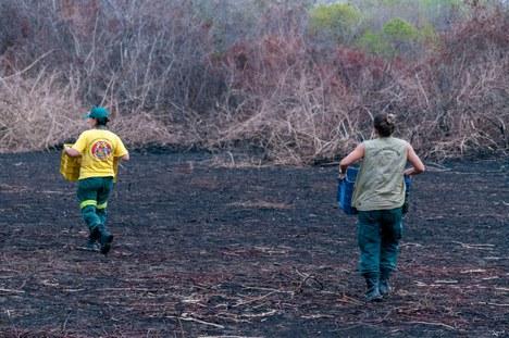 2020-10-28-resgate-animais-pantanal-foto-Vinicius_Mendonca-Ibama