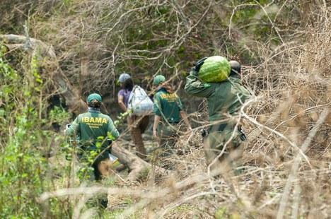 2020-10-28-resgate-animais-pantanal2-foto-Vinicius_Mendonca-Ibama