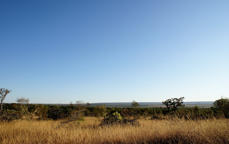 Parque Nacional de Brasília realiza ações de queima controlada