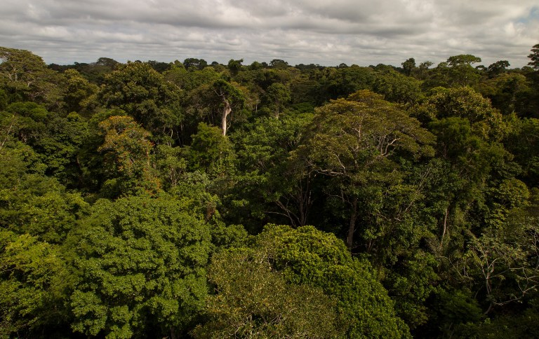 """Floresta Nacional de Tapajós, uma das unidades disponíveis para """"adoção"""" (Foto: Leonardo Milano)"""