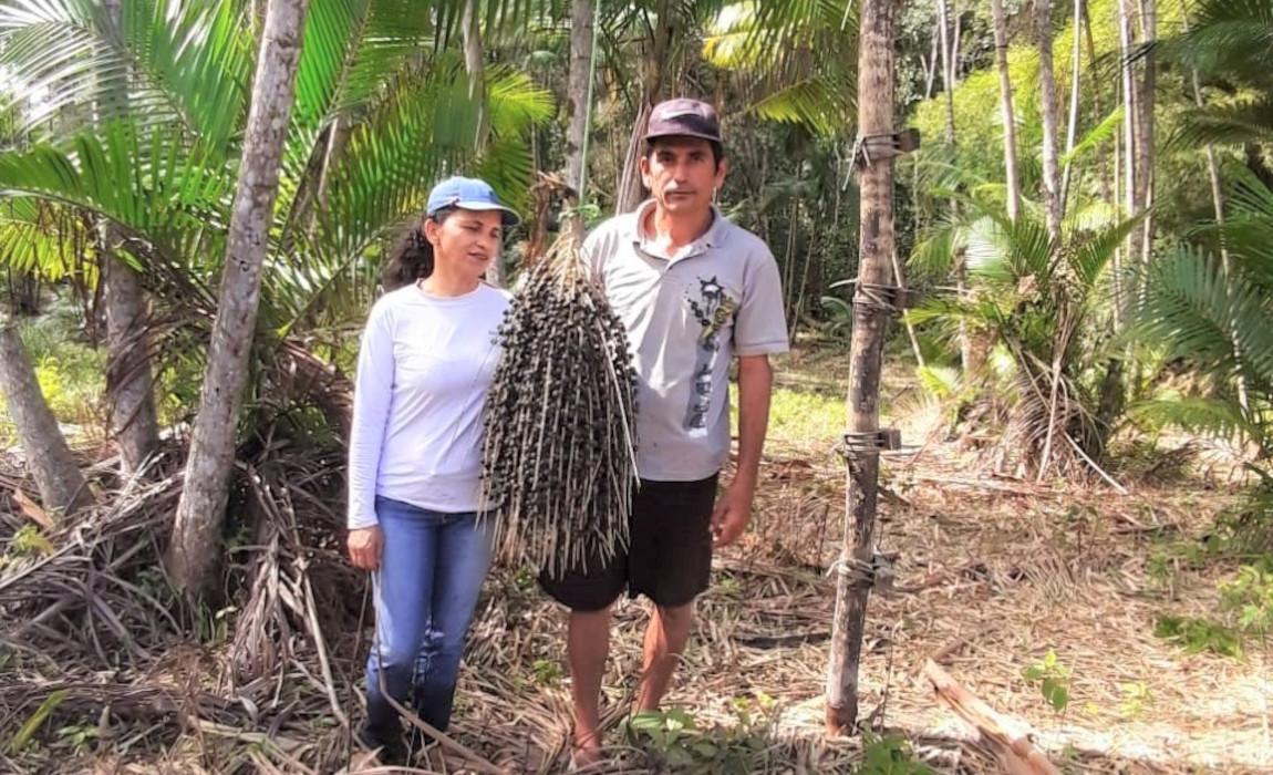 Agricultores Assentados de Maragogi produzem polpa e café de açaí