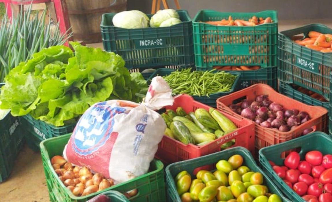 Agricultores catarinenses comemoram produção orgânica