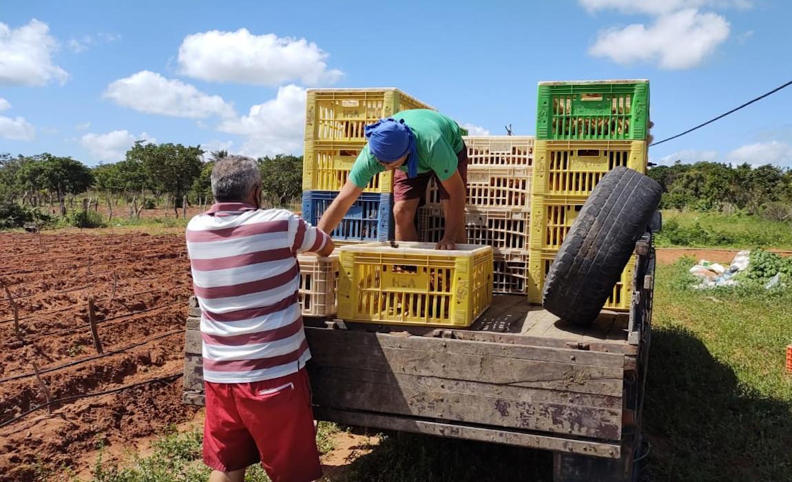 Criação de galinhas muda cenário econômico em assentamento potiguar