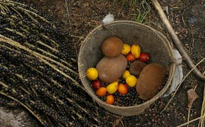 Frutas típicas da região norte. Sistema Agrícola Tradicional do Rio Negro (SAT), bem registrado em 2010  Foto:Pedro Portella e Julia Barreto