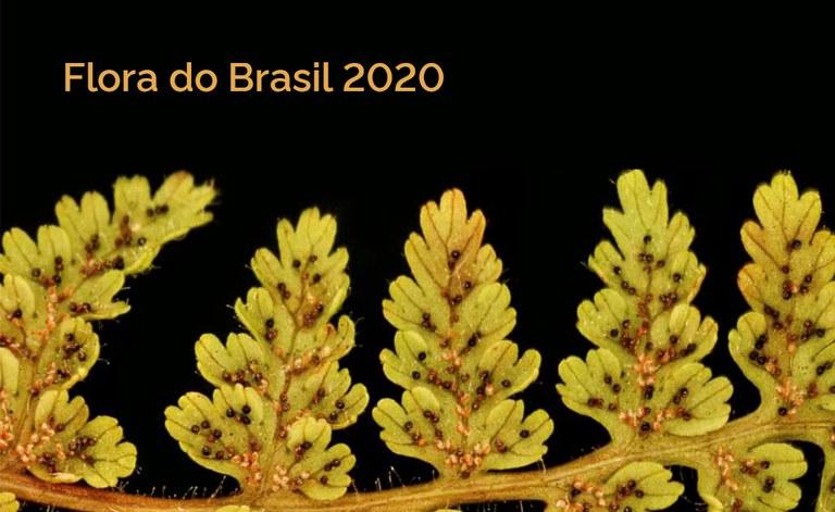 Flora_site-banner.jpg