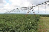 O Polo de Irrigação do Oeste da Bahia, reconhecido em outubro de 2019 por meio de portaria do MDR, abrange 17 municípios, com uma área irrigada de mais de 190 mil hectares (Foto: AIBA/Divulgação)