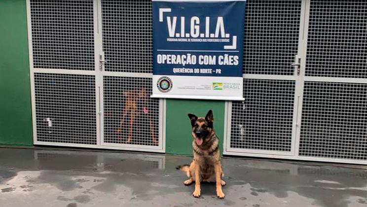 Base Integrada Trarbach, em Querência do Norte, no Paraná, será a primeira a receber animais para auxiliar o trabalho do Programa Vigia
