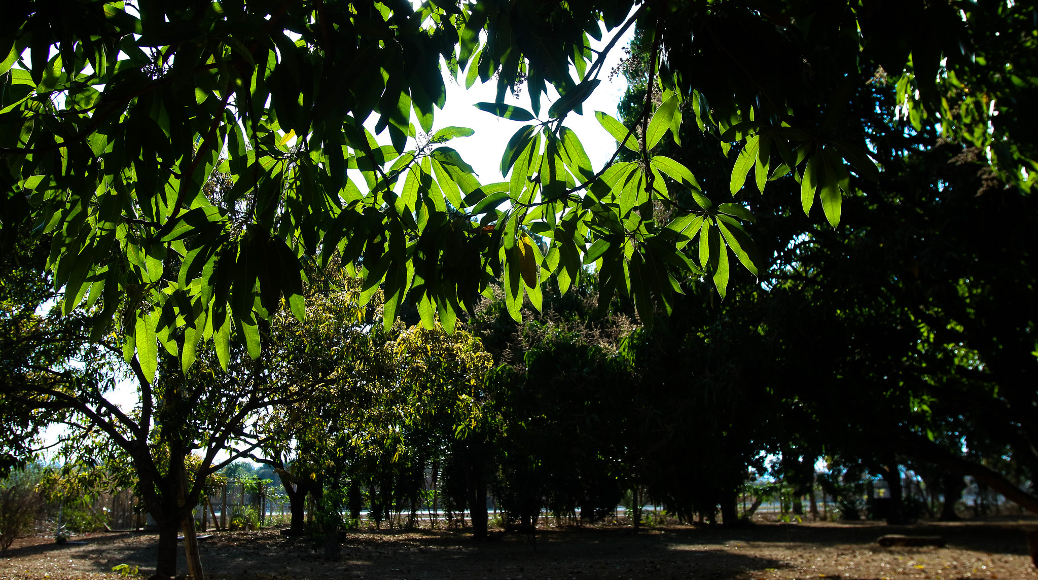 Confira o resultado preliminar do edital de chamamento público para criação e melhorias de parques urbanos