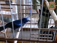 PF identifica esquema de aquisição clandestina de pássaros e falsificação de informações em sistema do IBAMA