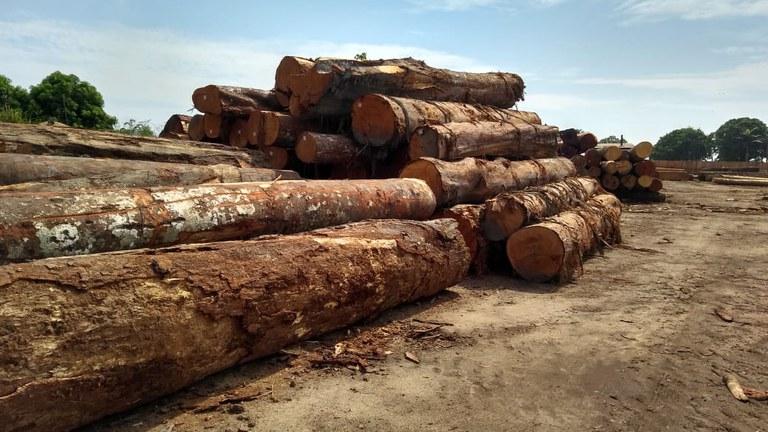 Lumber company assets seized in Jaci-Paraná
