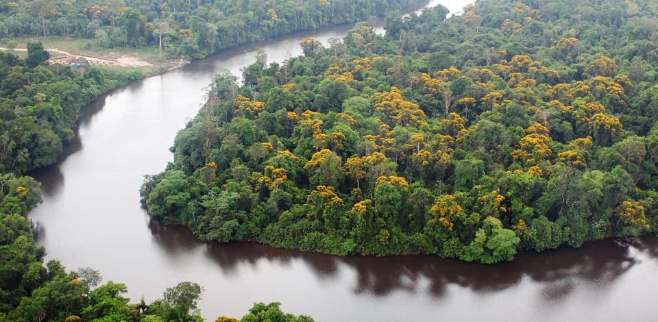 Preservação do meio ambiente: preocupação prevista na Constituição ...