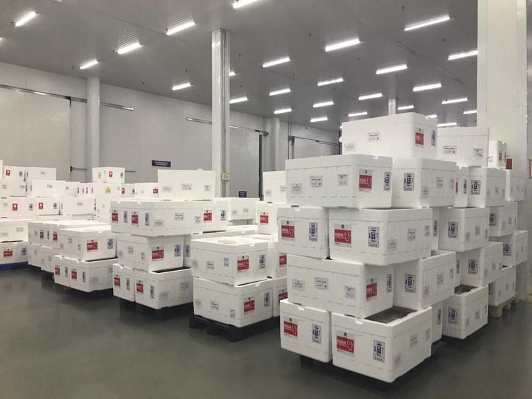 Governo distribui mais 2,6 milhões de doses de vacina contra a Covid-19