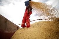 Armazenagem de grãos. Foto: Agência Brasil