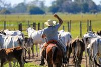Linha de crédito vai possibilitar que produtores e empreendedores do Pantanal possam recuperar suas atividades no período mais breve possível (Foto: Divulgação)