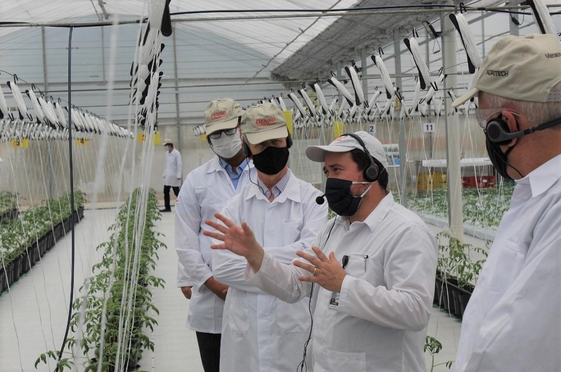 Com a produção tradicional plenamente estabelecida, um desafio aceito pela empresa foi diversificar sua produção e desenvolver técnicas que permitissem a cultura de tomate em uma região climaticamente desfavorável para este tipo de produto.